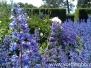 Historisk Botanisk Have