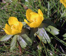 It looks like spring ... Vordingborg February 2014